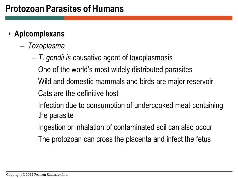 parazitele protozoare ppt)