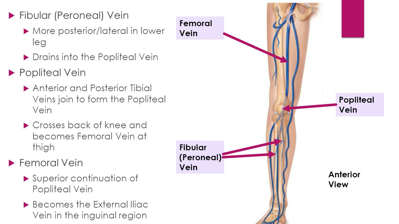 The Knee (Tibiofemoral) Joint - ppt video online download