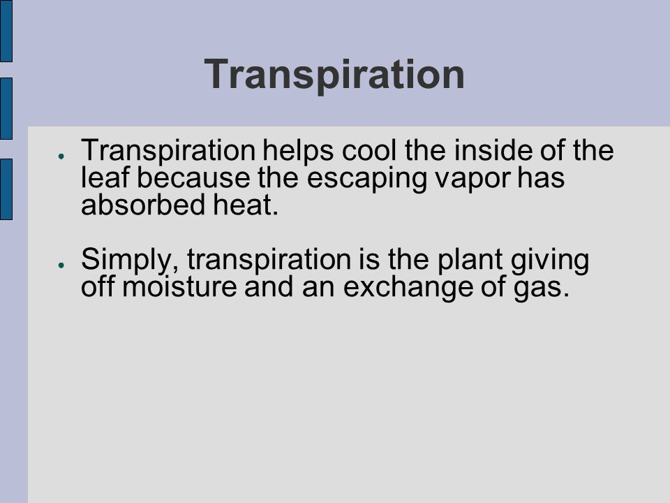 Transpiration Transpiration helps cool the inside of the leaf because the escaping vapor has absorbed heat.