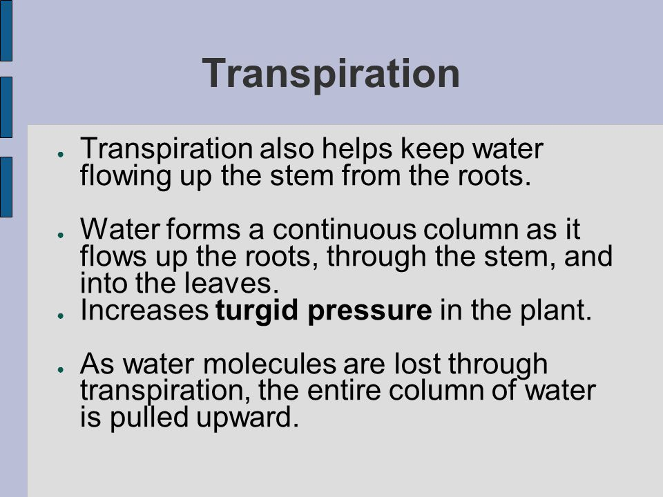 Transpiration Transpiration also helps keep water flowing up the stem from the roots.