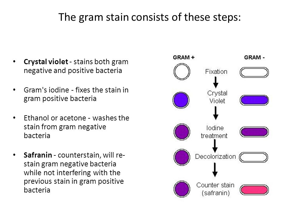 gram staining microbiology formal lab report Interpreting microbiology reports  the microbiology reports that follow are all from the same patient, same culture step 1: the gram stain the process of gram staining.