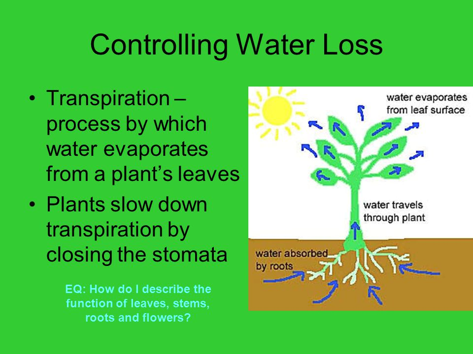 Controlling Water Loss