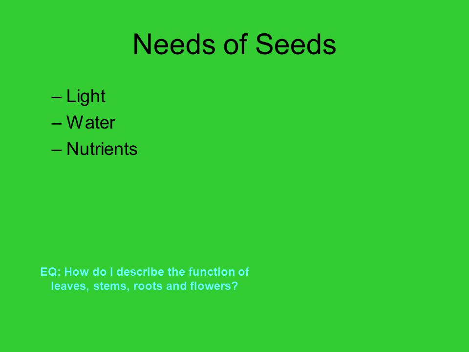 Needs of Seeds Light Water Nutrients