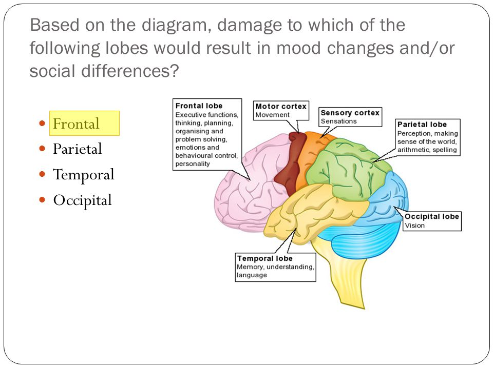 Based on the diagram, damage to which of the following lobes would result in mood changes and/or social differences