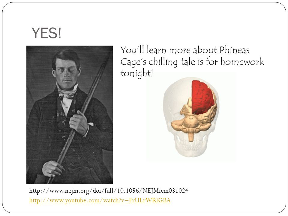 YES! You'll learn more about Phineas Gage's chilling tale is for homework tonight!
