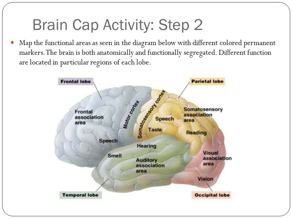 Brain Cap Activity: Step 2