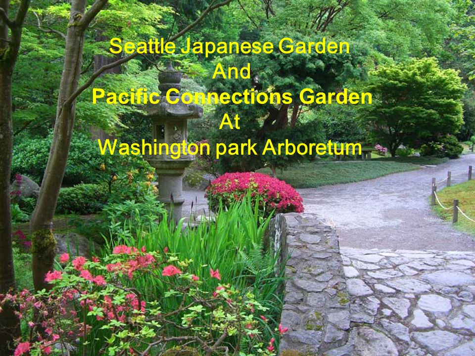 Seattle Japanese Garden Pacific Connections Garden