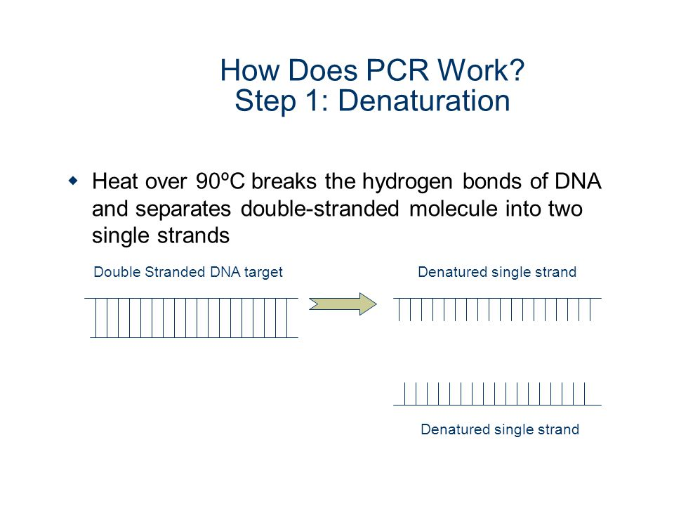 How Does PCR Work Step 1: Denaturation