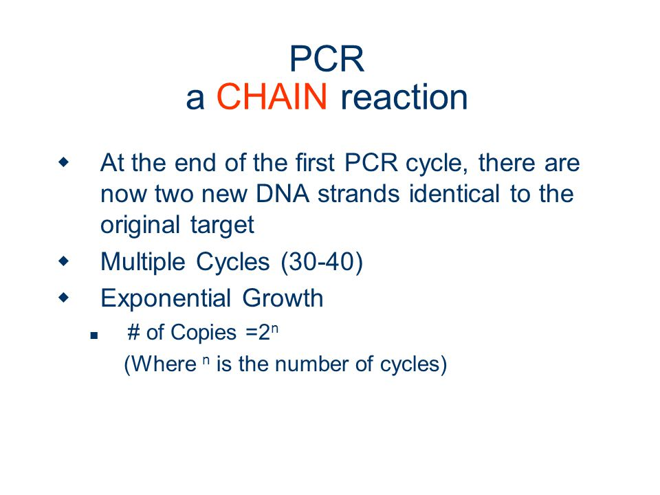 PCR a CHAIN reaction At the end of the first PCR cycle, there are now two new DNA strands identical to the original target.