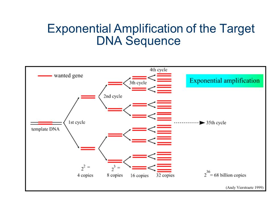 Exponential Amplification of the Target DNA Sequence
