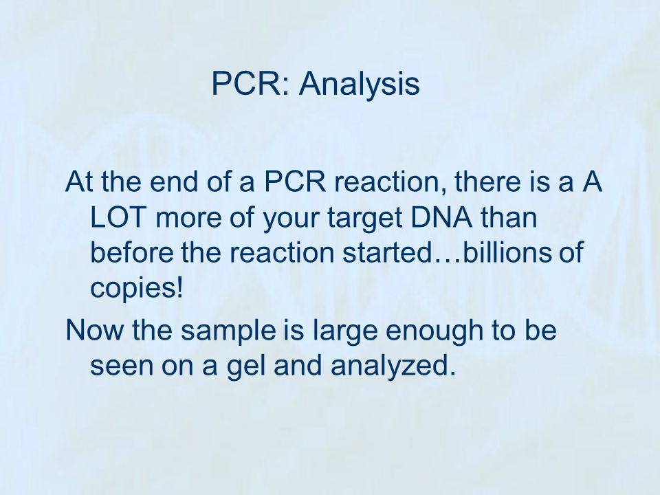 PCR: Analysis At the end of a PCR reaction, there is a A LOT more of your target DNA than before the reaction started…billions of copies!