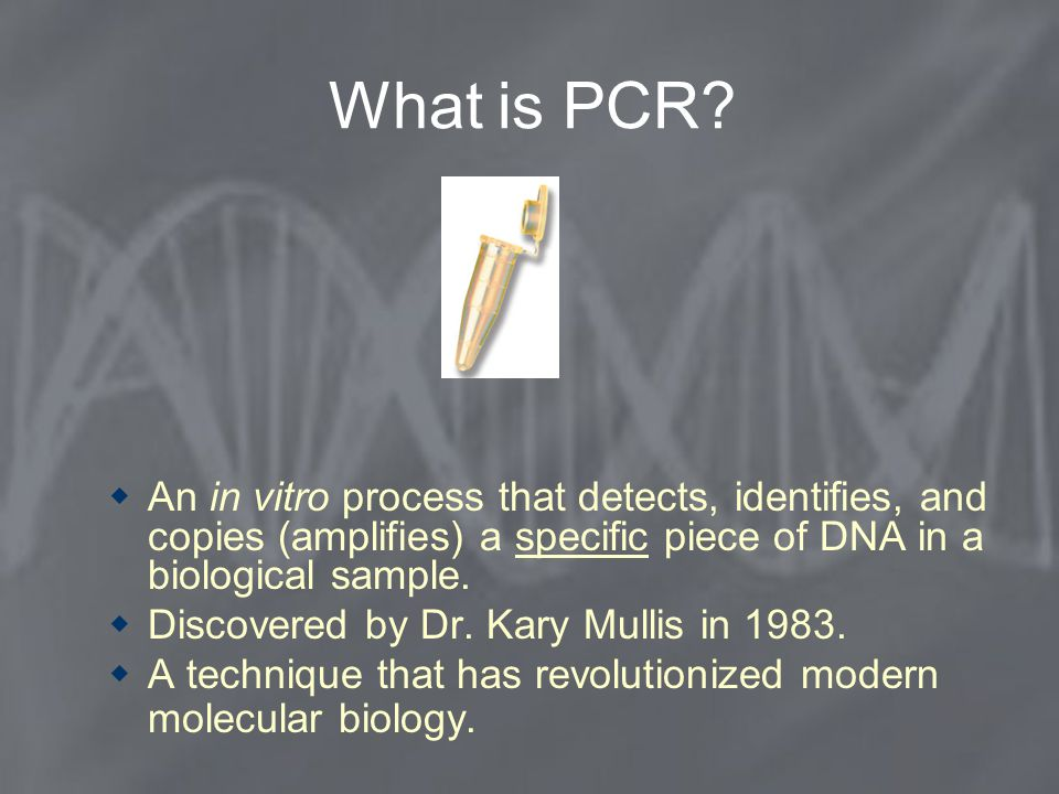 What is PCR An in vitro process that detects, identifies, and copies (amplifies) a specific piece of DNA in a biological sample.