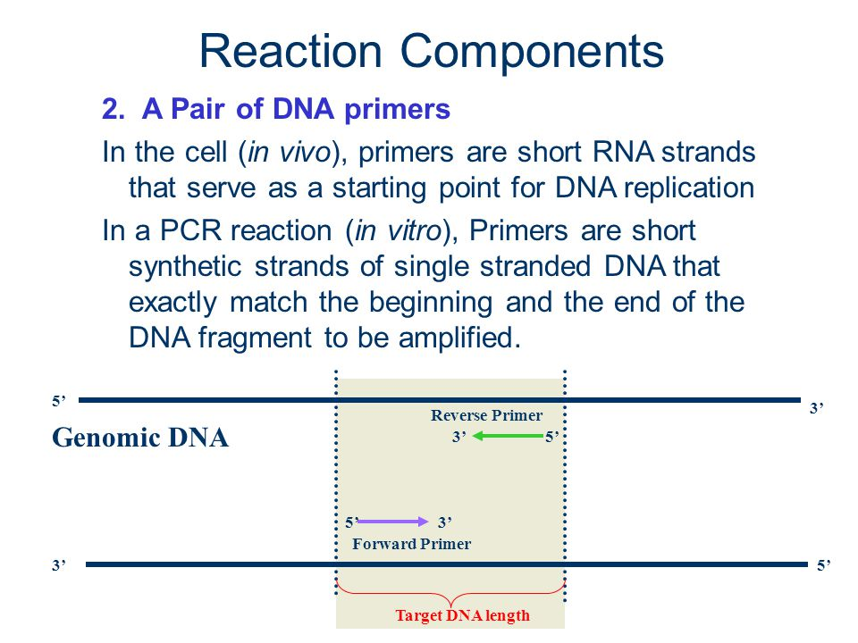 Reaction Components 2. A Pair of DNA primers