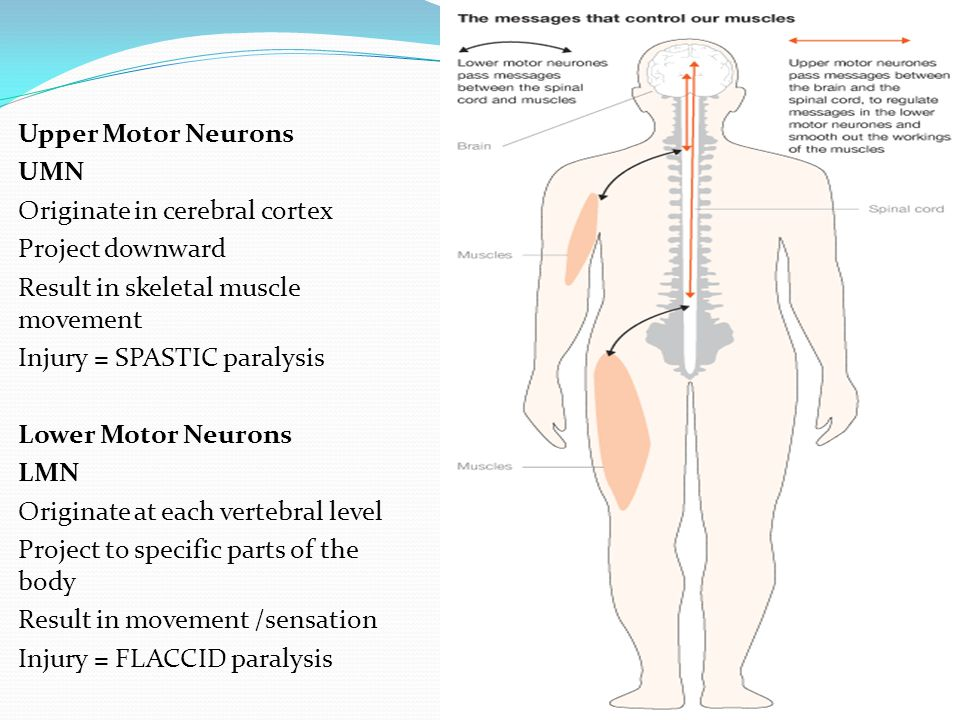 Spinal Cord Injury Herniated Disc Spinal Cord Tumors - ppt download