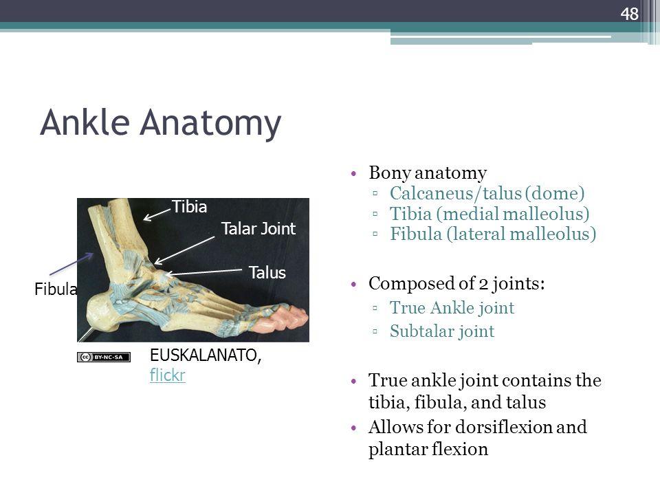 Modern Anatomy Of Talus Motif - Human Anatomy Images ...