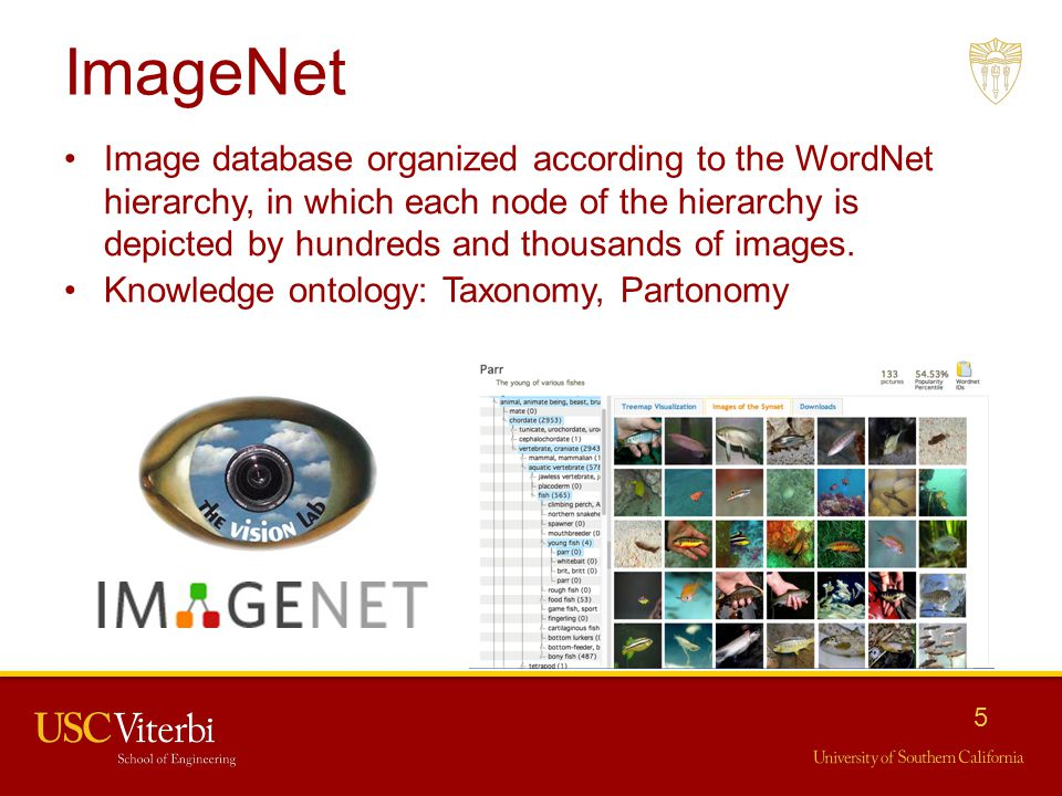 Imagenet Download Synset ✓ Fitrini's Wallpaper