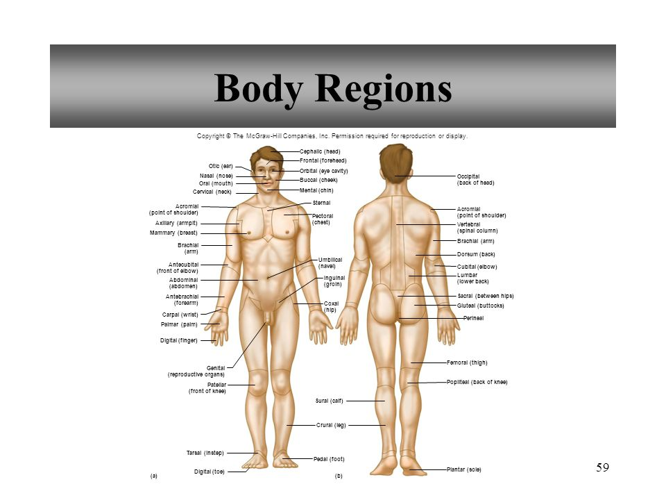 59 body regions