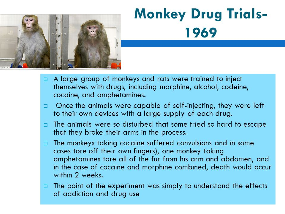 monkey drug trials 1969