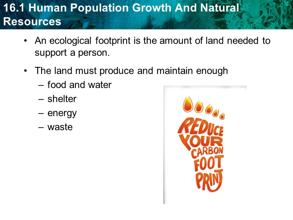 An ecological footprint is the amount of land needed to support a person.