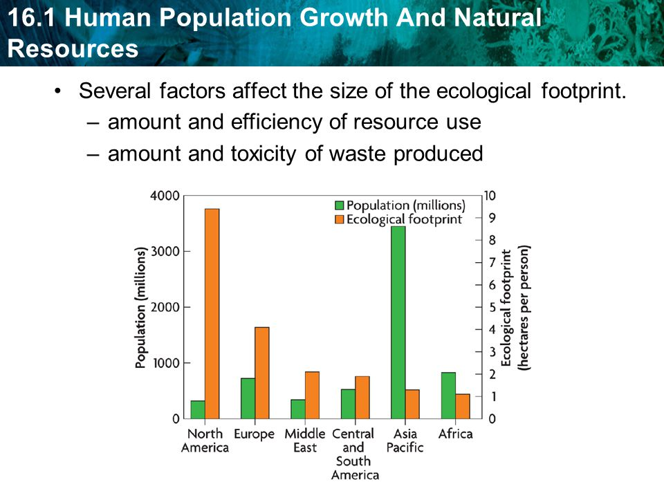 Several factors affect the size of the ecological footprint.