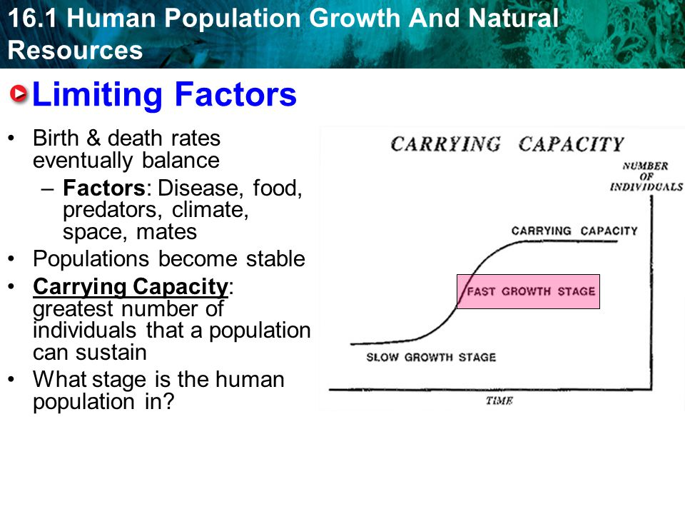 Limiting Factors Birth & death rates eventually balance