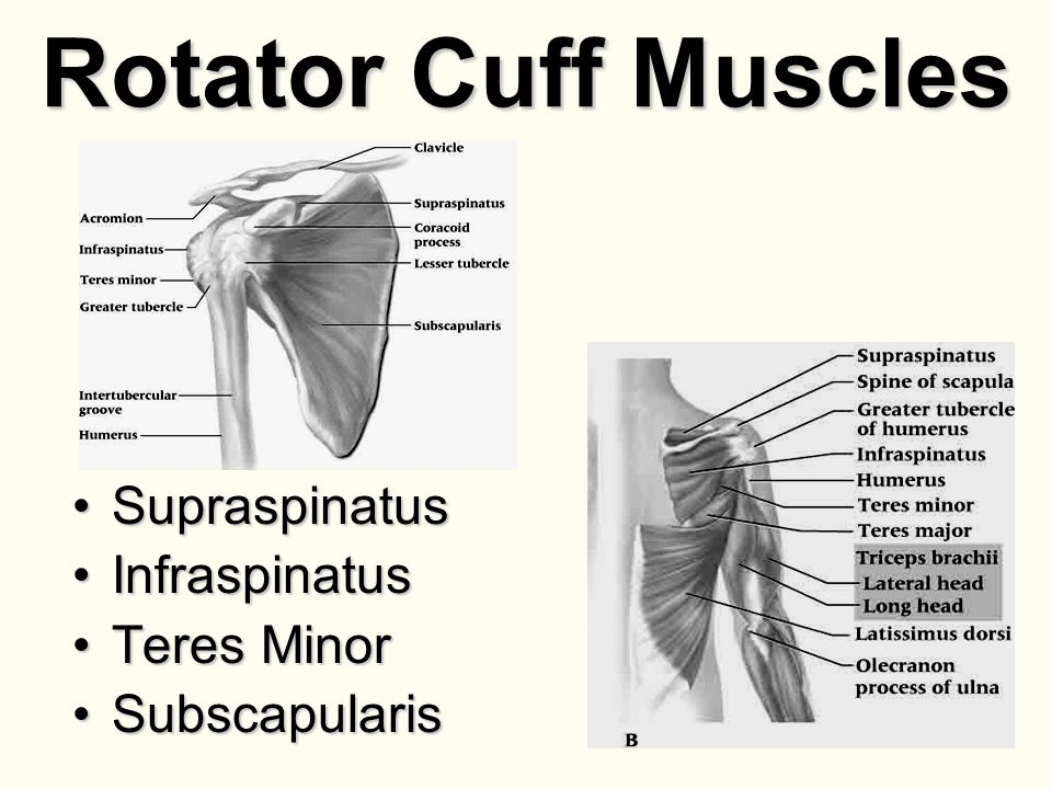 Shoulder Anatomy, Injuries and Assessment - ppt video online download