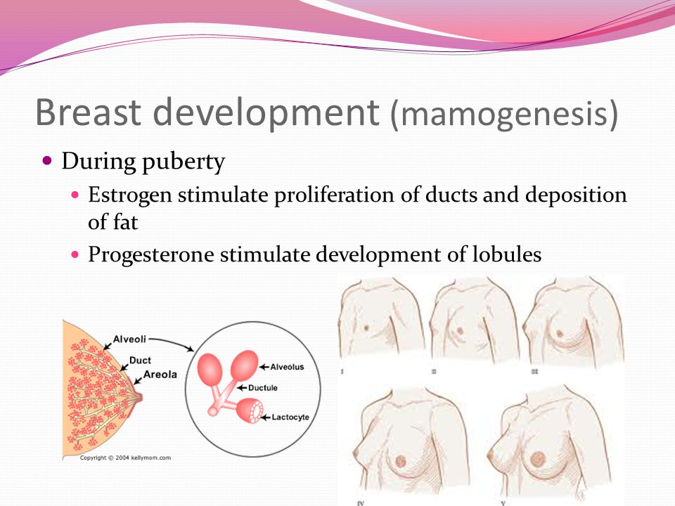 7 Breast development ...