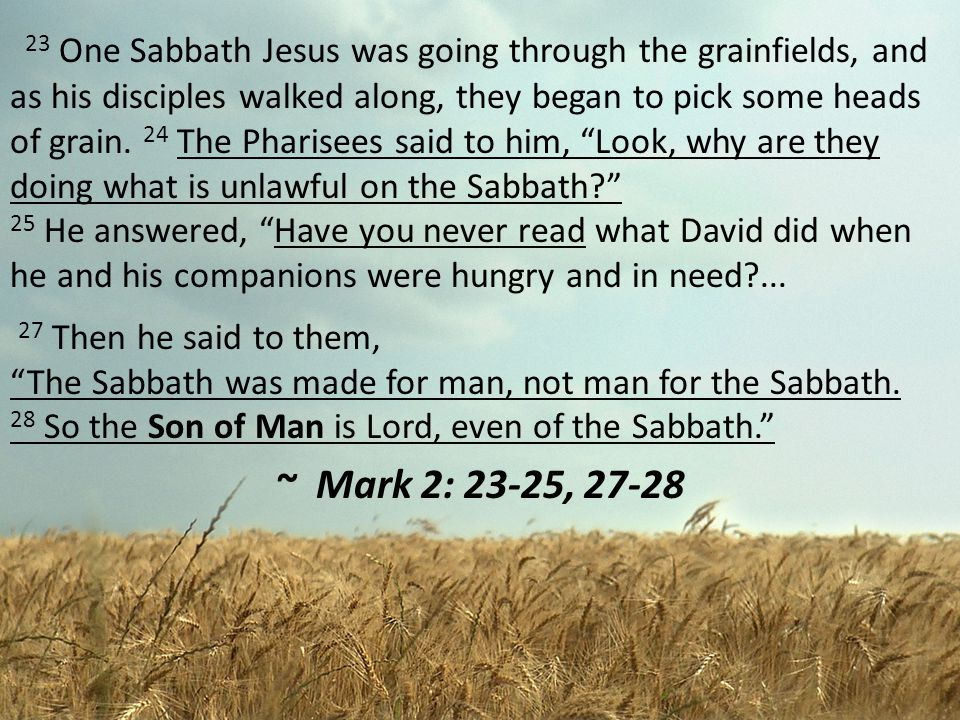 23 One Sabbath Jesus was going through the grainfields, and as his disciples walked along, they began to pick some heads of grain. 24 The Pharisees said to him, Look, why are they doing what is unlawful on the Sabbath