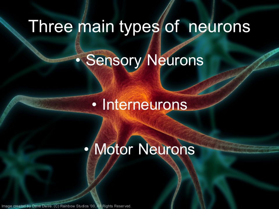 Three main types of neurons