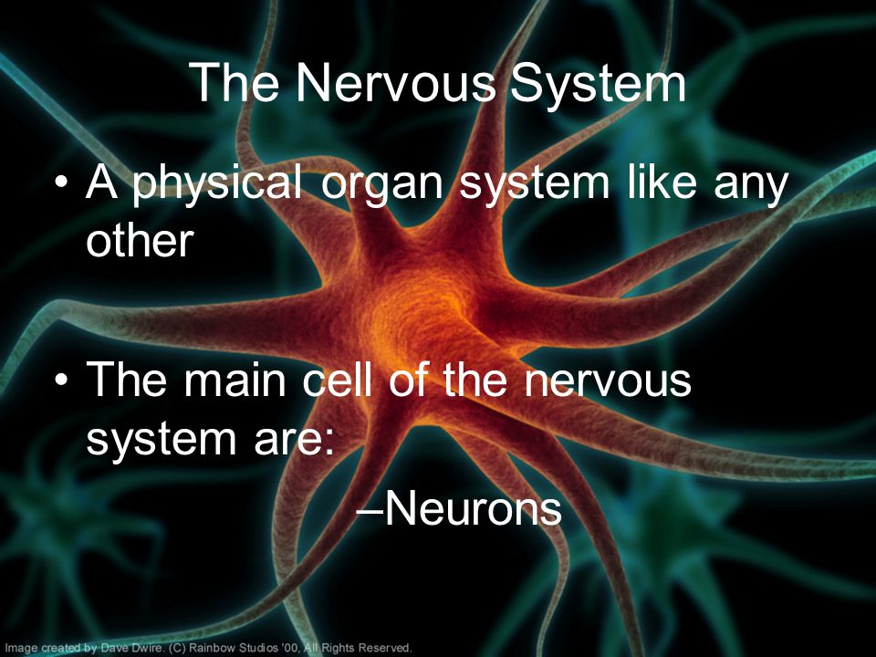 The Nervous System A physical organ system like any other