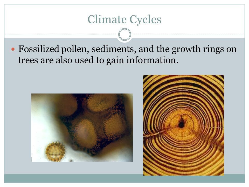 Climate Cycles Fossilized pollen, sediments, and the growth rings on trees are also used to gain information.