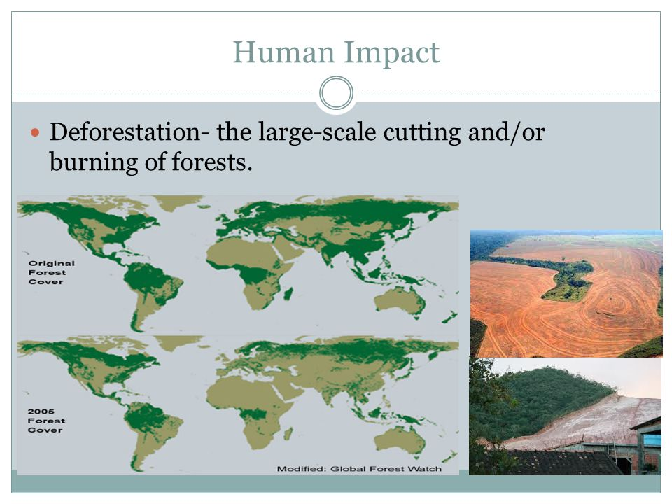 Human Impact Deforestation- the large-scale cutting and/or burning of forests.