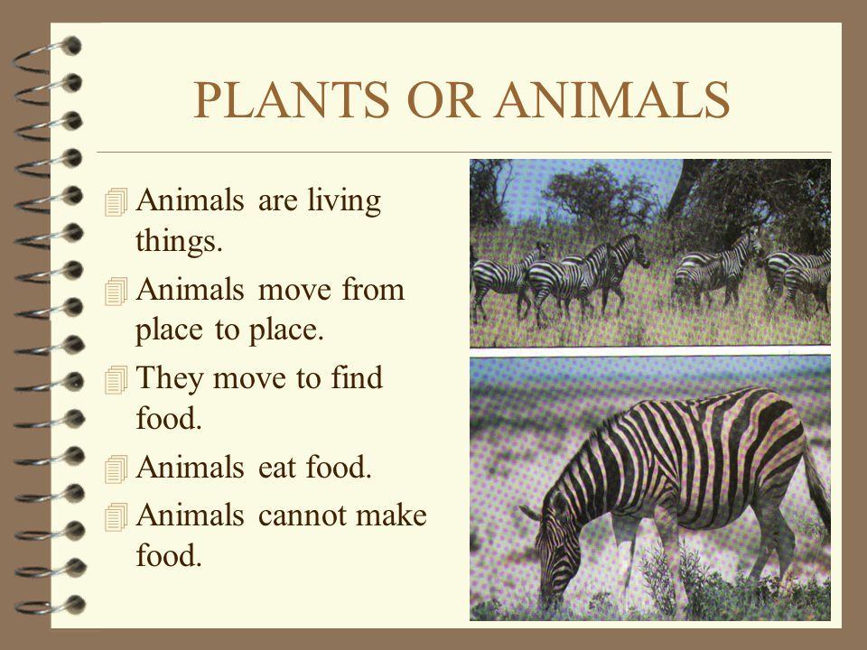 PLANTS OR ANIMALS Animals are living things.
