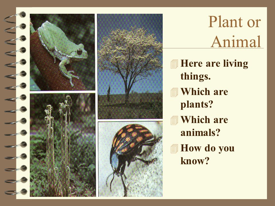Plant or Animal Here are living things. Which are plants