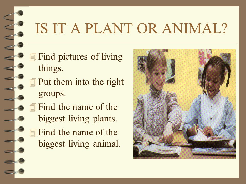 IS IT A PLANT OR ANIMAL Find pictures of living things.