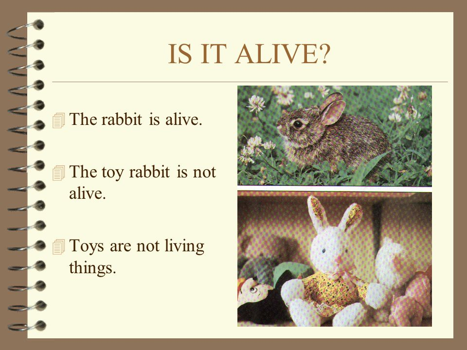 IS IT ALIVE The rabbit is alive. The toy rabbit is not alive.