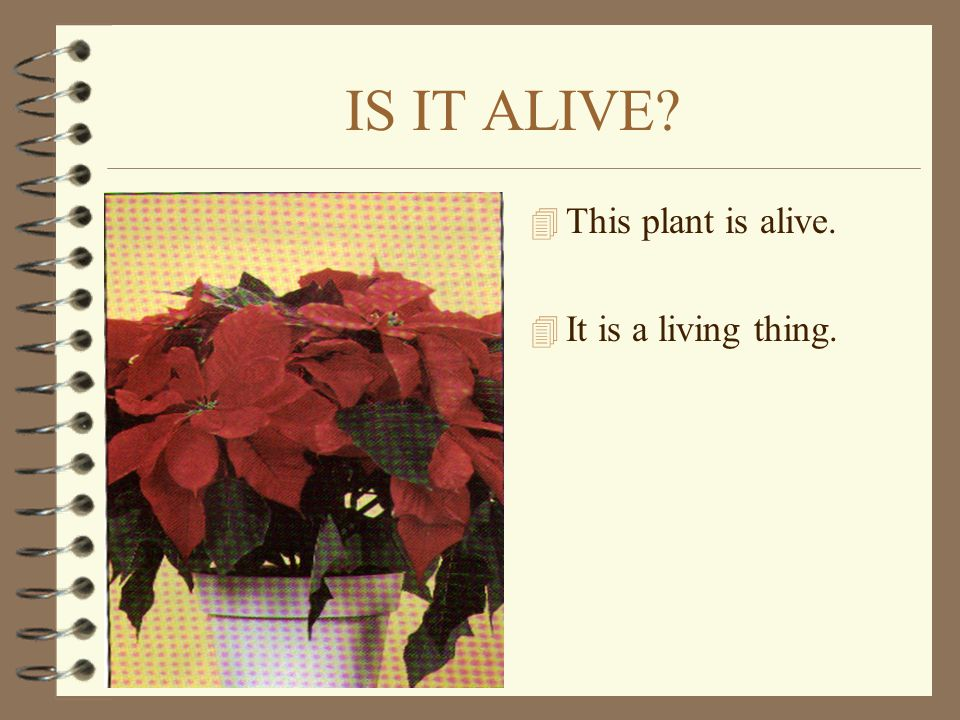 IS IT ALIVE This plant is alive. It is a living thing.