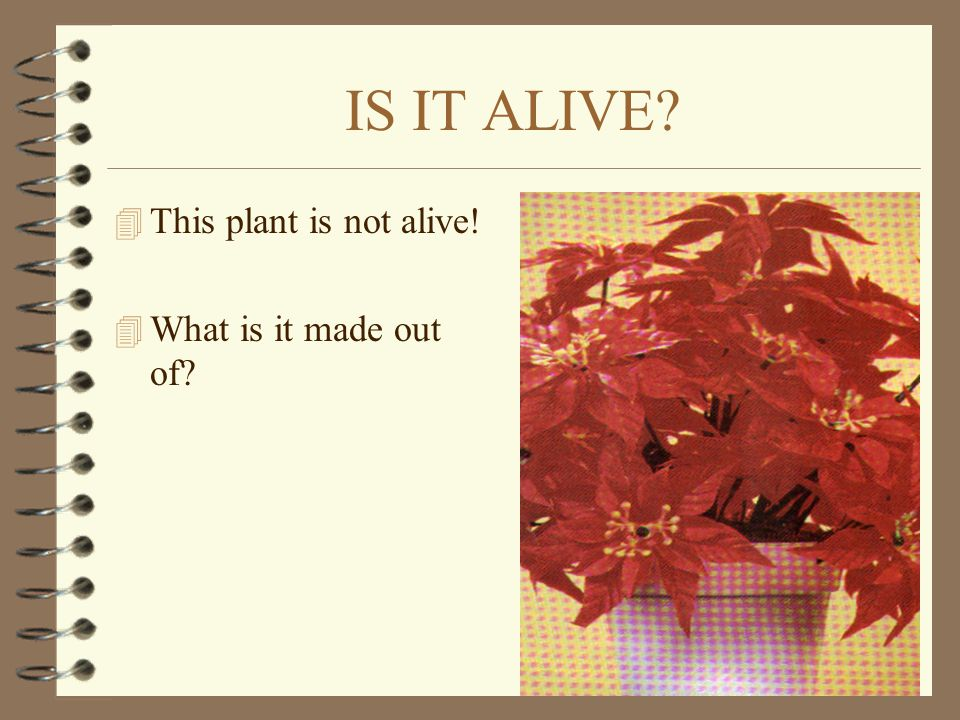 IS IT ALIVE This plant is not alive! What is it made out of