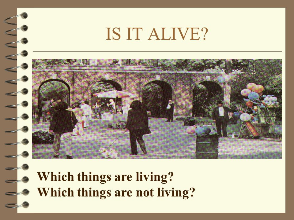 IS IT ALIVE Which things are living Which things are not living