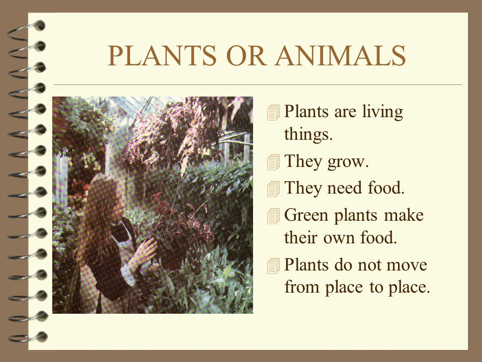 PLANTS OR ANIMALS Plants are living things. They grow. They need food.