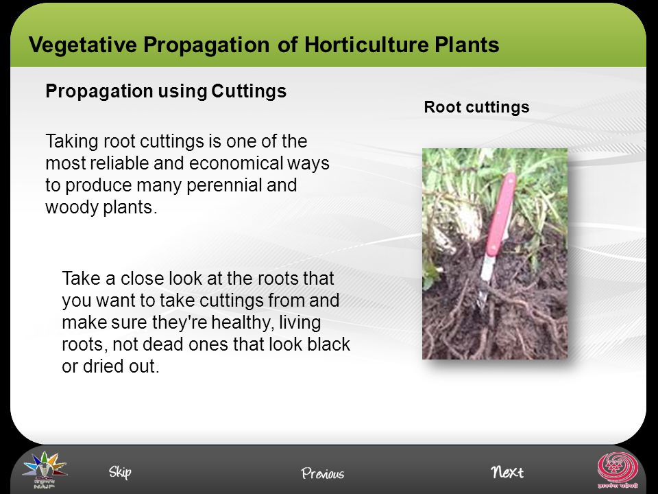 Asexual propagation of horticultural crops images