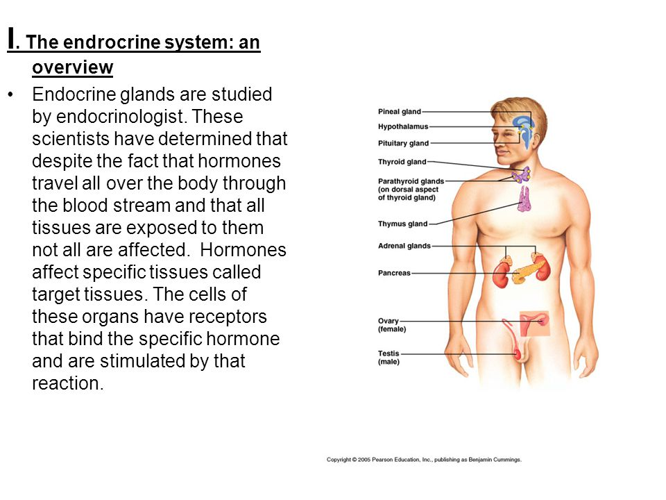 The Endocrine System Human Anatomy Chapter Ppt Video Online Download
