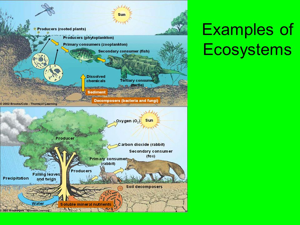 List of different types of ecosystem with example.