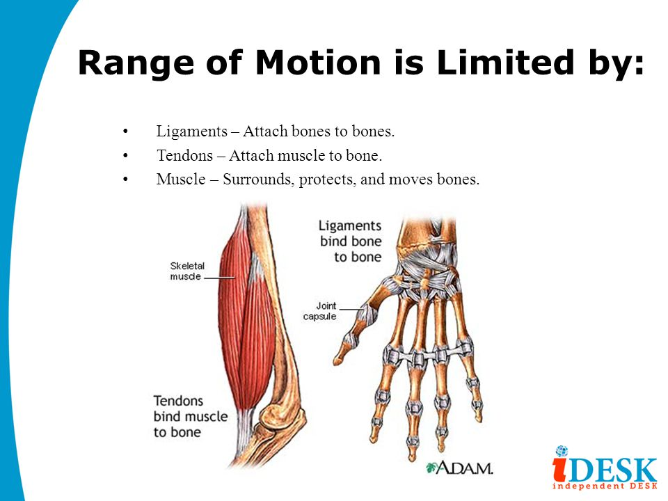 Range of Motion is Limited by: