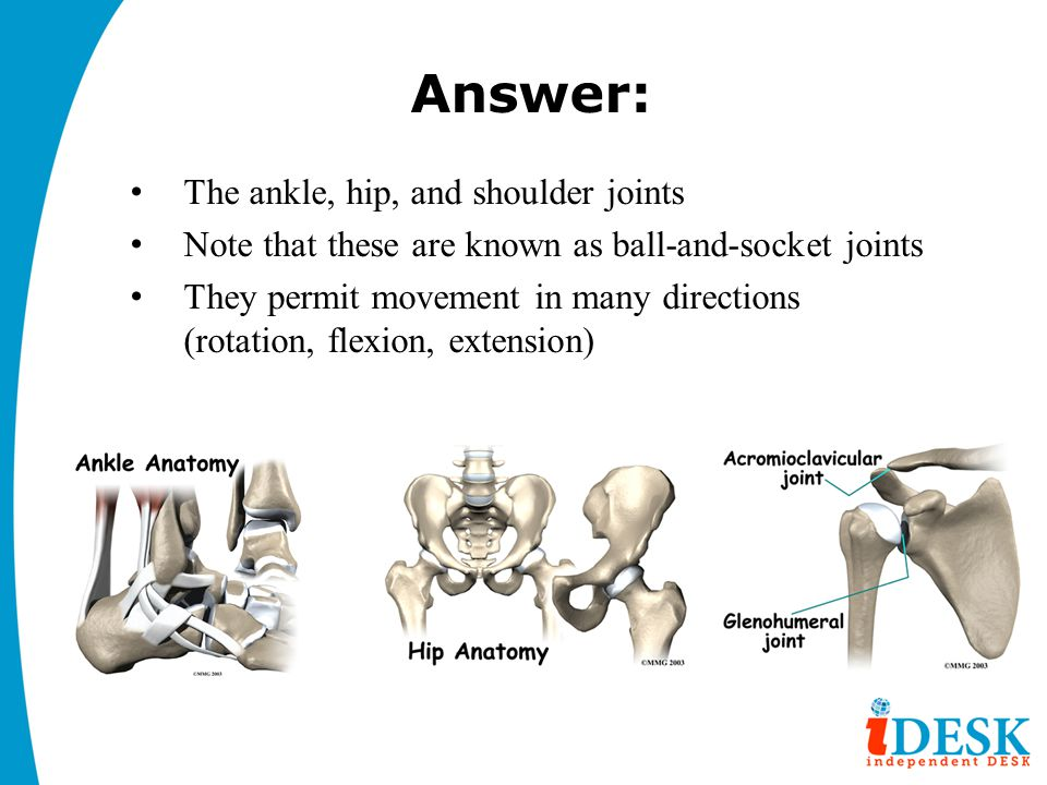 Answer: The ankle, hip, and shoulder joints