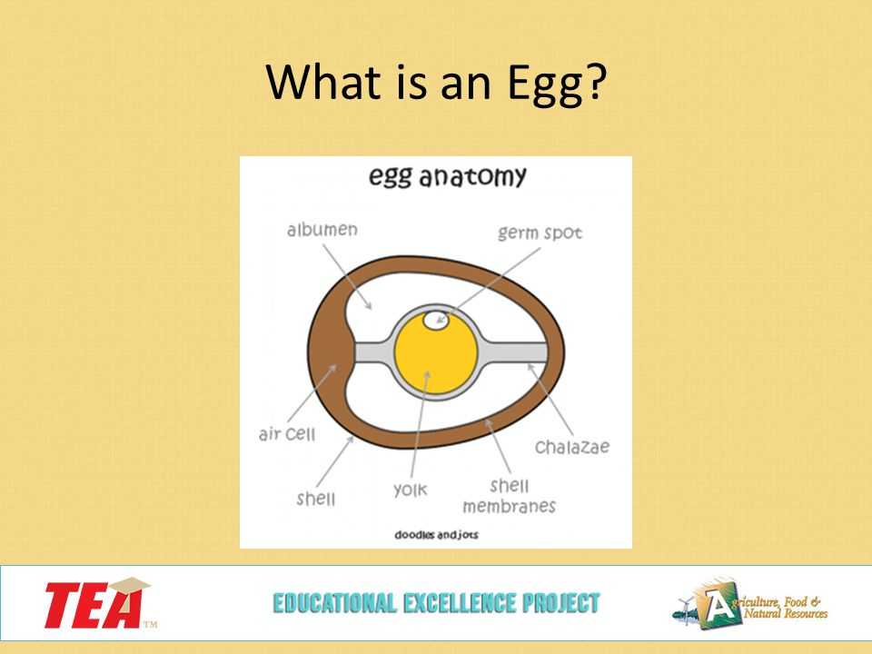 Poultry Egg Production - ppt video online download