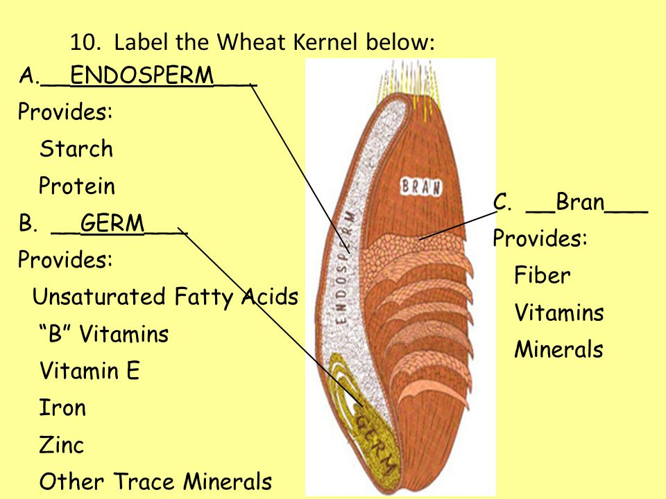 10. Label the Wheat Kernel below: