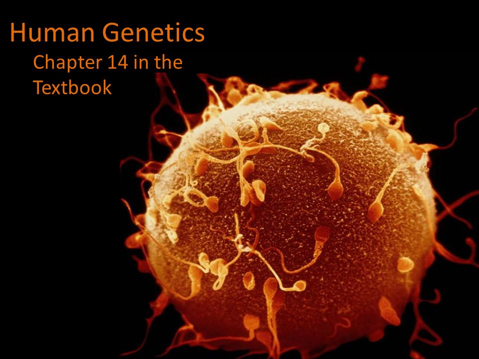Human Genetics Chapter 14 in the Textbook