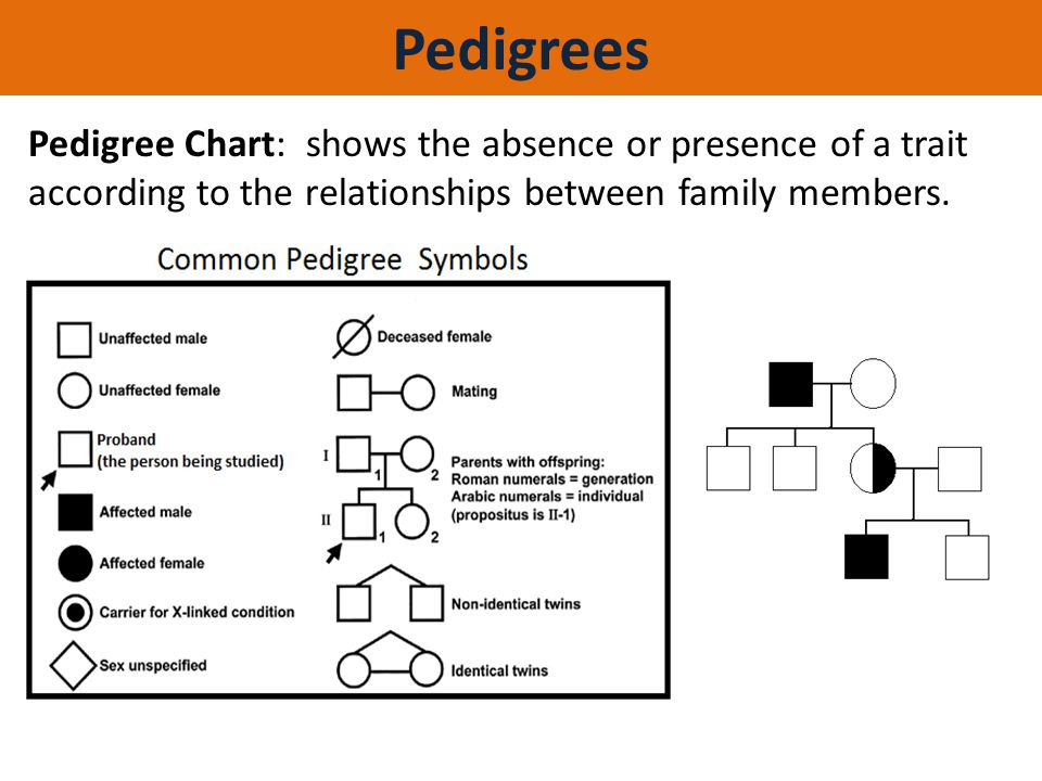 Pedigrees Pedigree Chart: shows the absence or presence of a trait according to the relationships between family members.