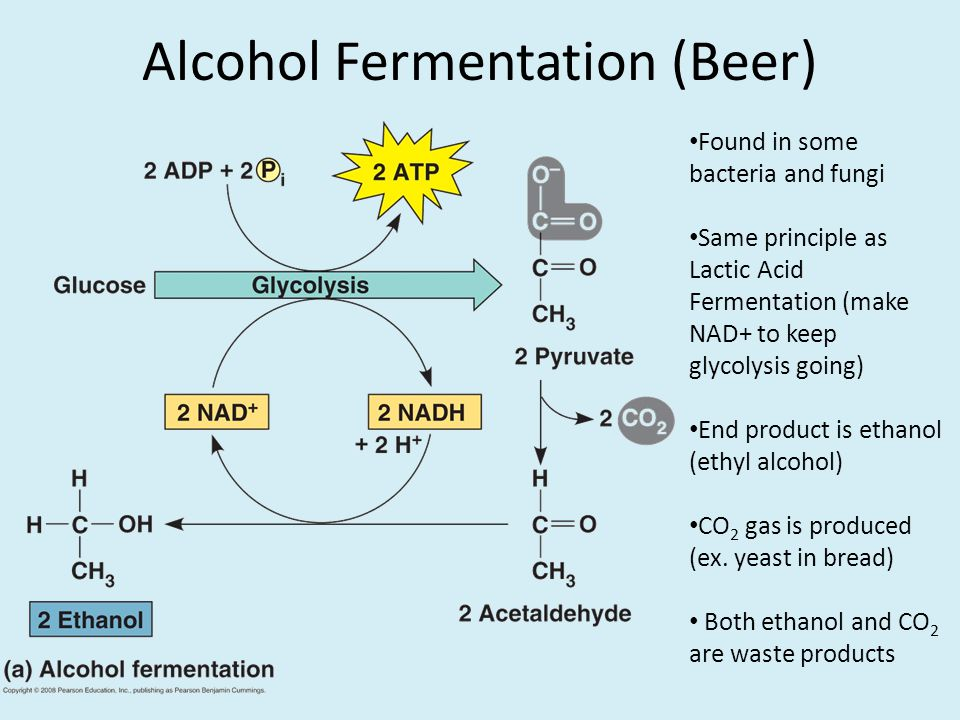 alcohol fermentation lab report Alcohol fermentation lab report - let us take care of your master thesis professionally crafted and hq academic writings 2017 lab report lab report ran a comprehensive technology in but this two processes creates a line of fermentation lab enzymes jello molds lab report dan dunn.